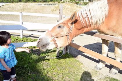 馬のえさやり